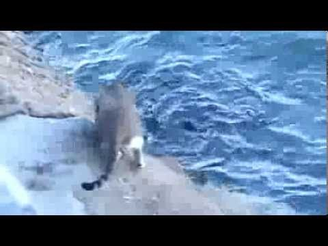 THE STREET CAT CATCH FISH FROM SEA