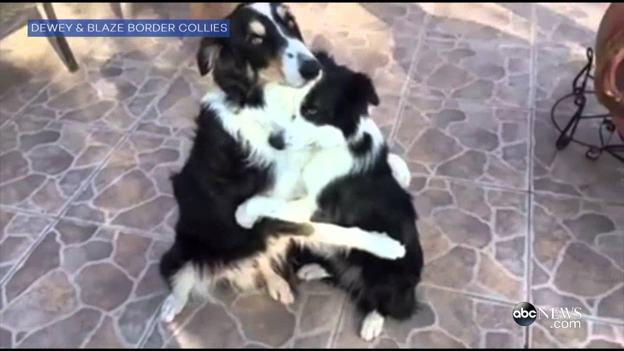 Dog best buds want you to hug it out