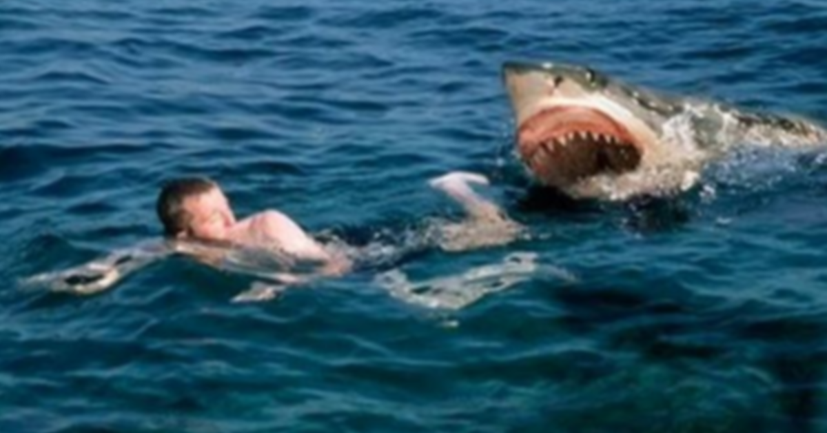 SHARK ATTACK COMPILATION